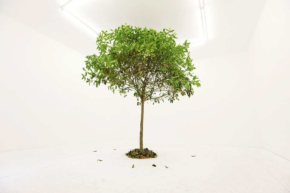 "Installation view of John Yuyi's new work titled ""I Tree to Call You"" at Gallery Vacancy."